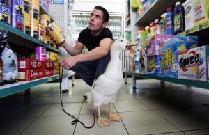 duck-supermarket_1464068i