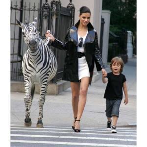 zebra_1464091i