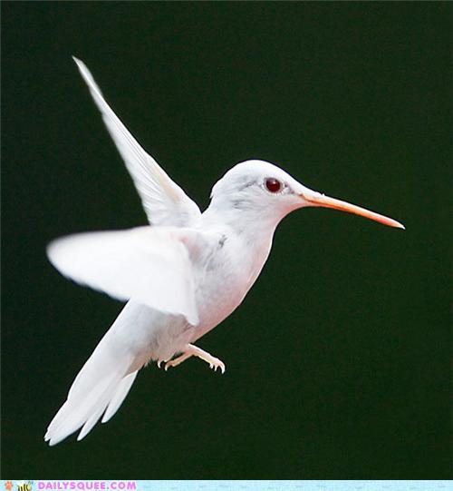 White Hummingbird | Fuzzy Today