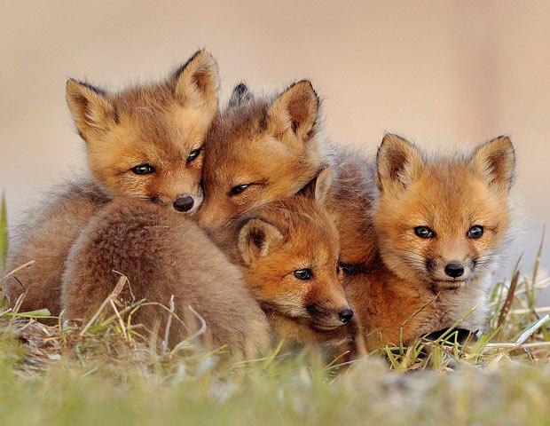 cute photos | Fuzzy Today