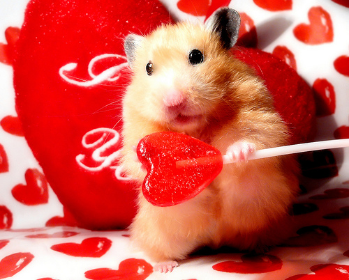 3277544192_85f9945946 - Valentines Animals