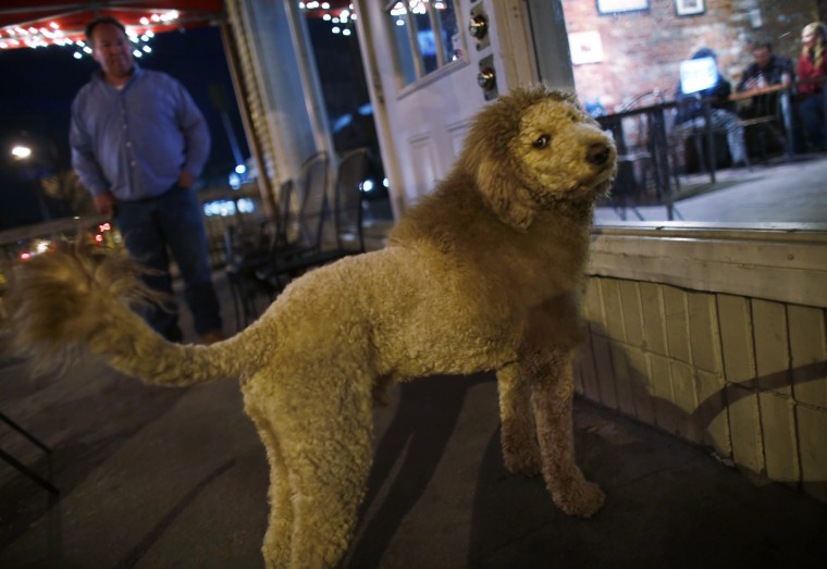 liondog