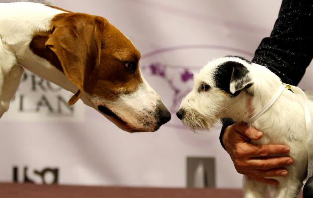 New-breeds-at-Westminster-Dog-Show_1_1