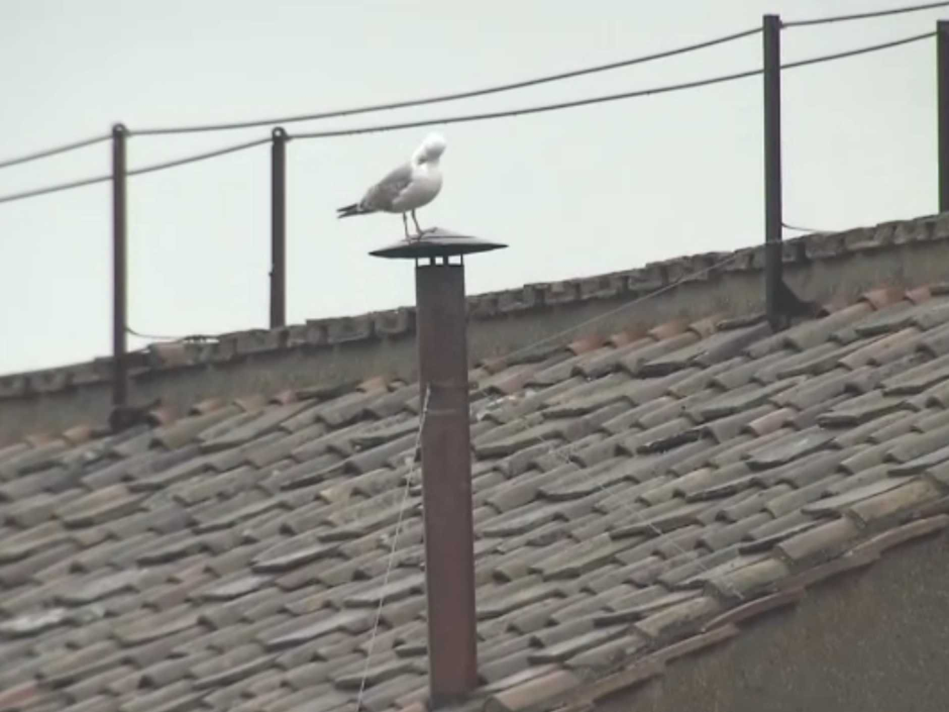 seagull-vatican-chimney