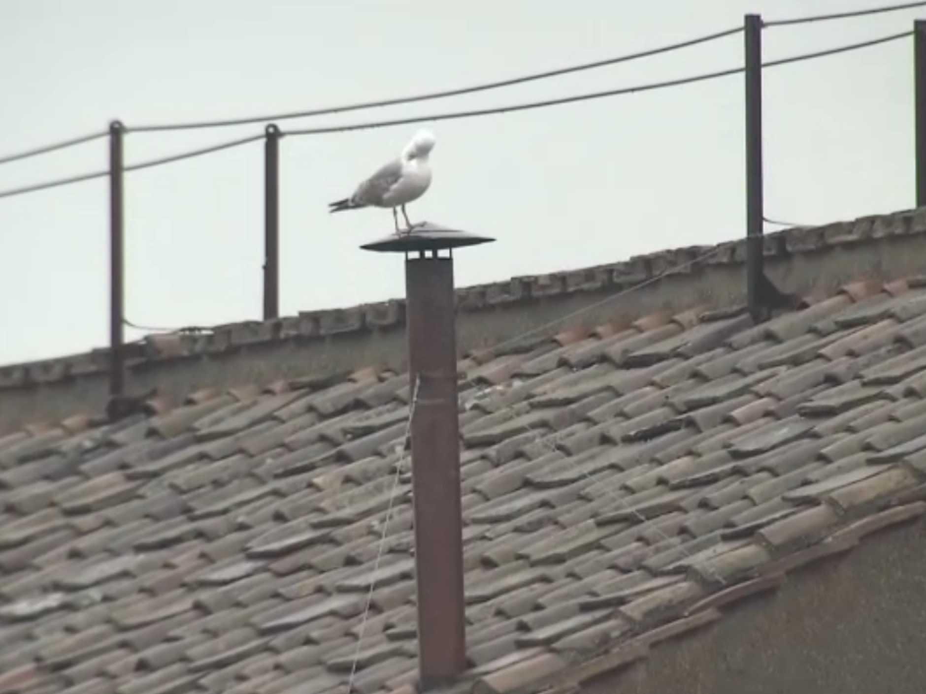 seagull-vatican-chimney