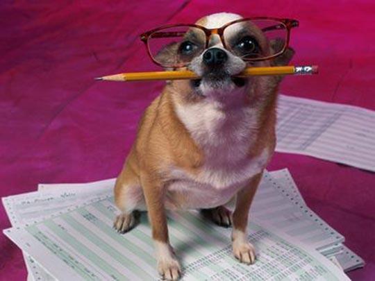 Dog-Accountant