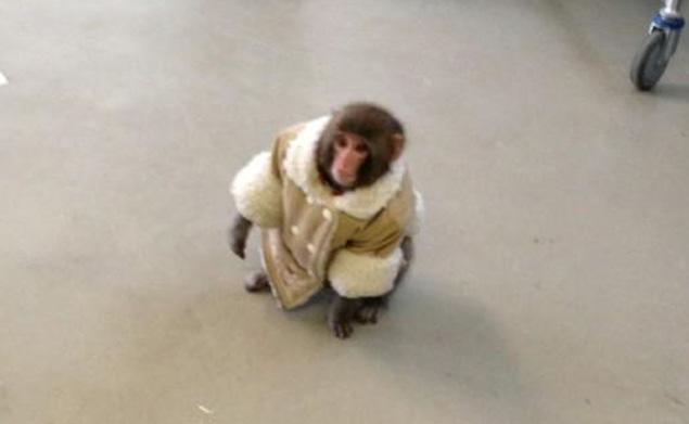 monkey11n-3-web