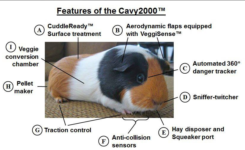 Guinea Pig Female Diagram - DIY Enthusiasts Wiring Diagrams •